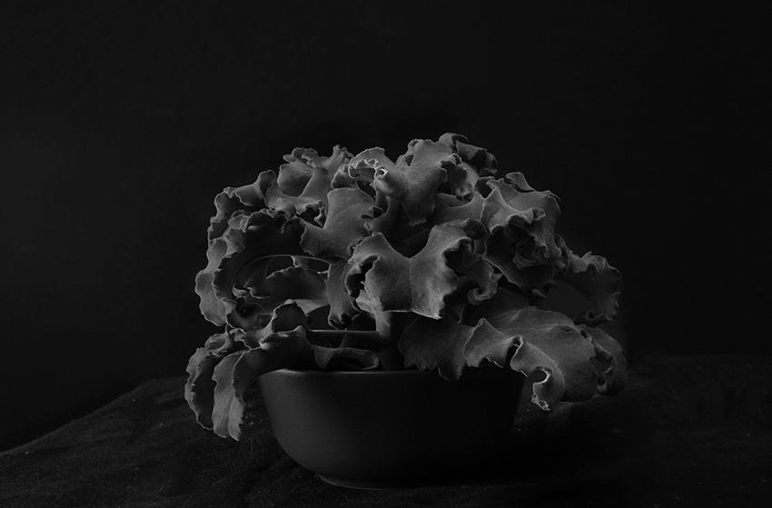 Plant portrait #9