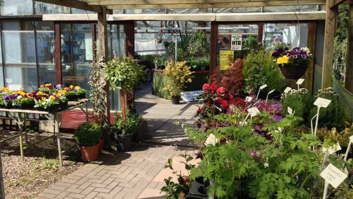 Various plants at our nursery in Sheffield
