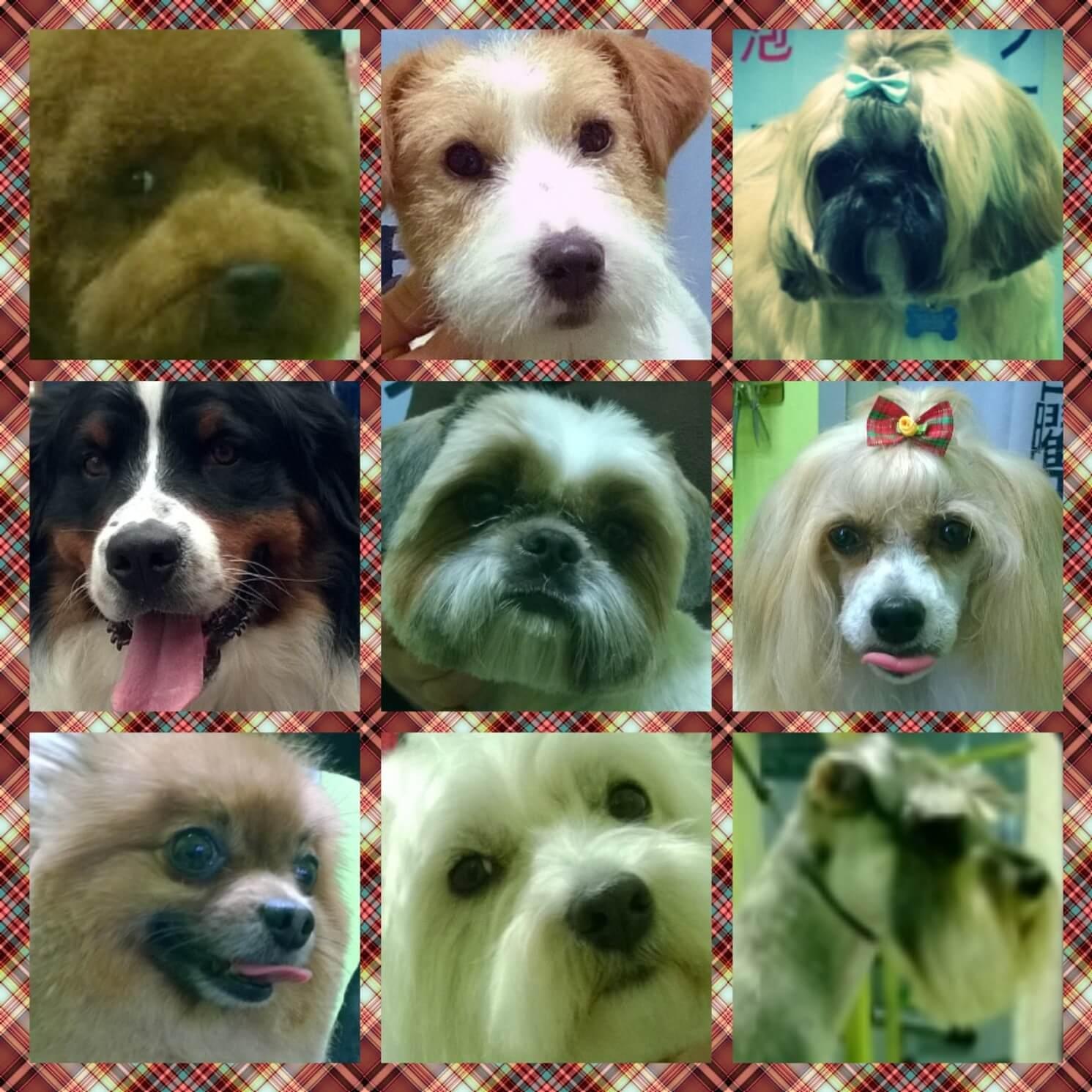 Terzo collage di 9 cagnolini.