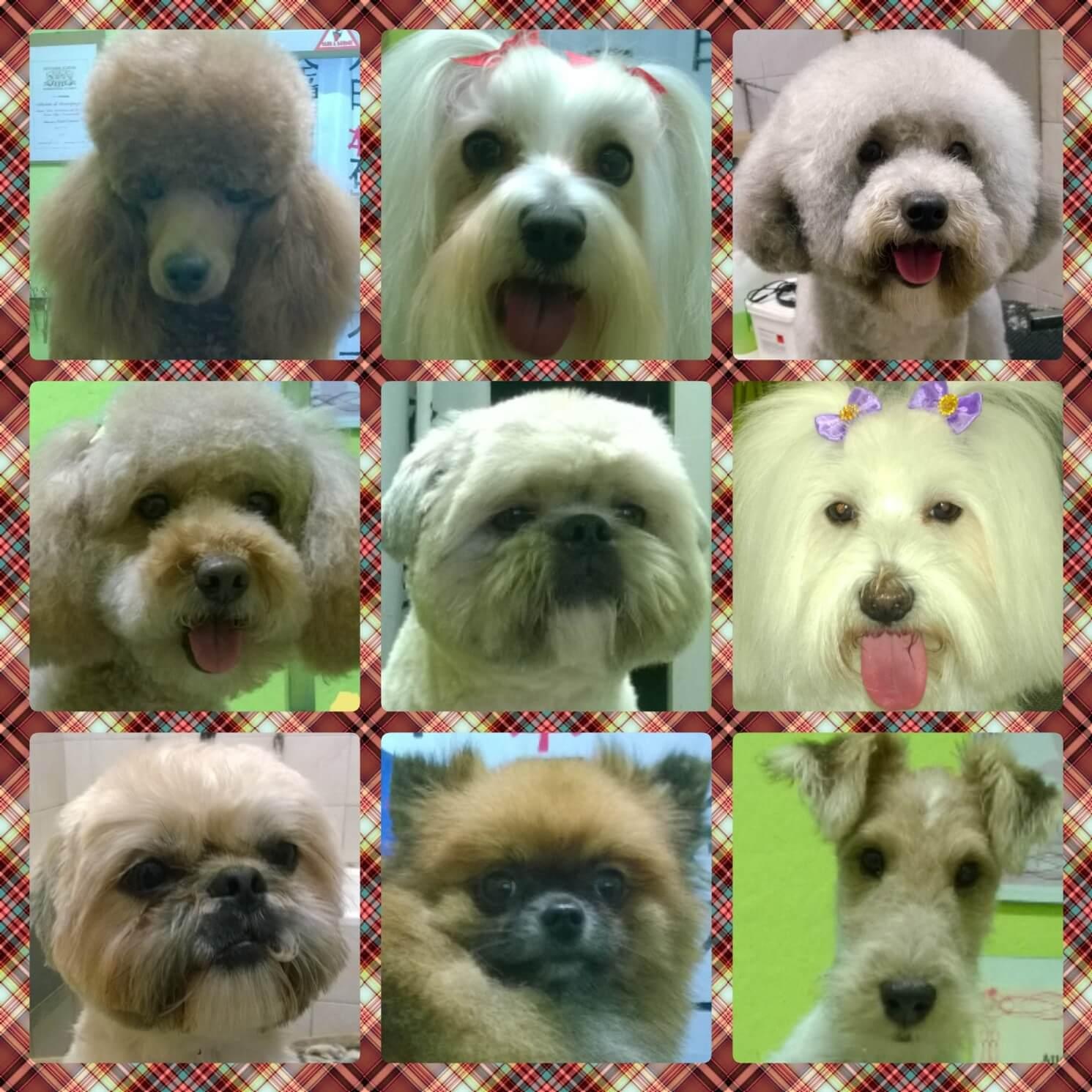 Collage di 9 cagnolini.