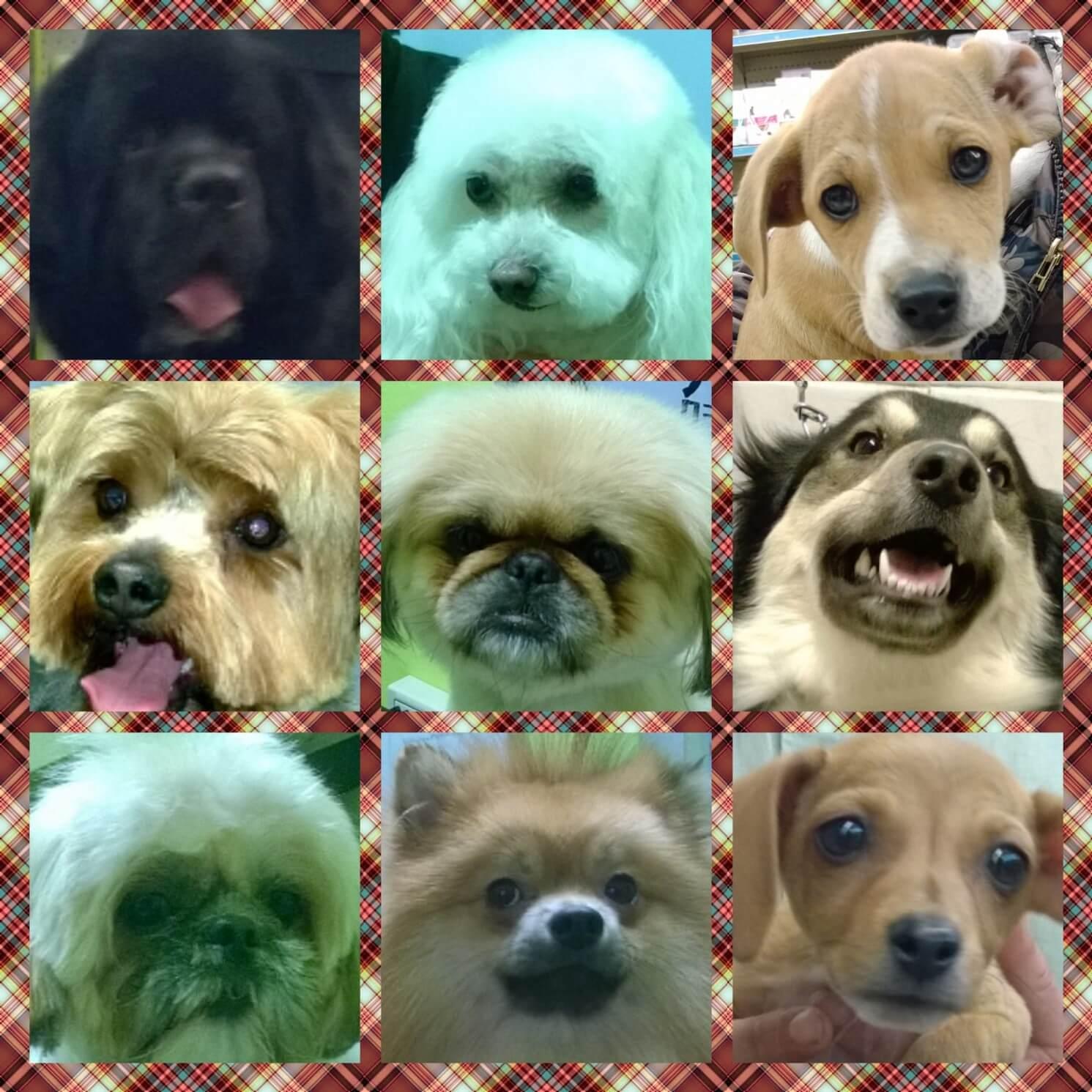 Altro collage di 9 cagnolini in primo piano.