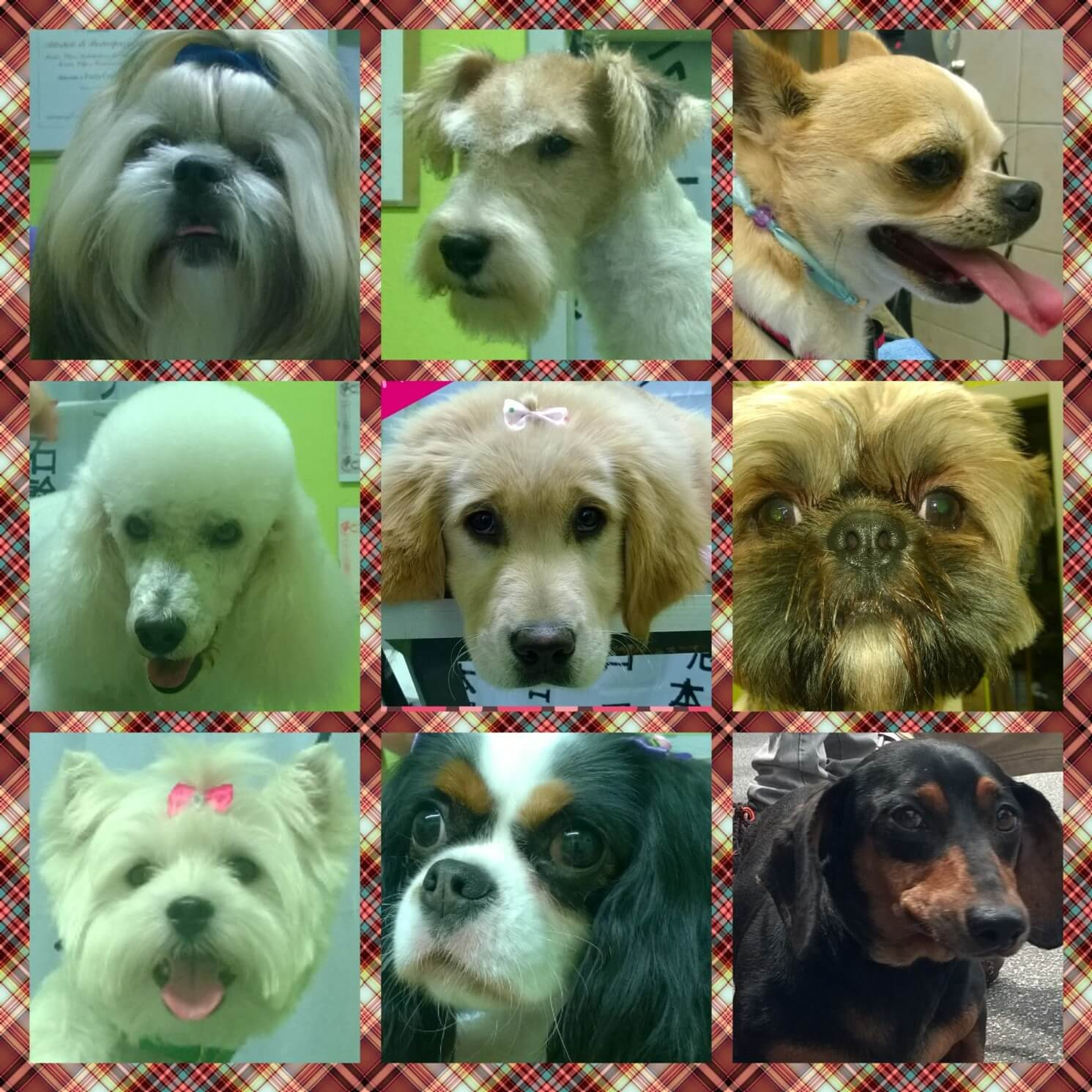 Quarto collage con 9 primi piani di cagnolini