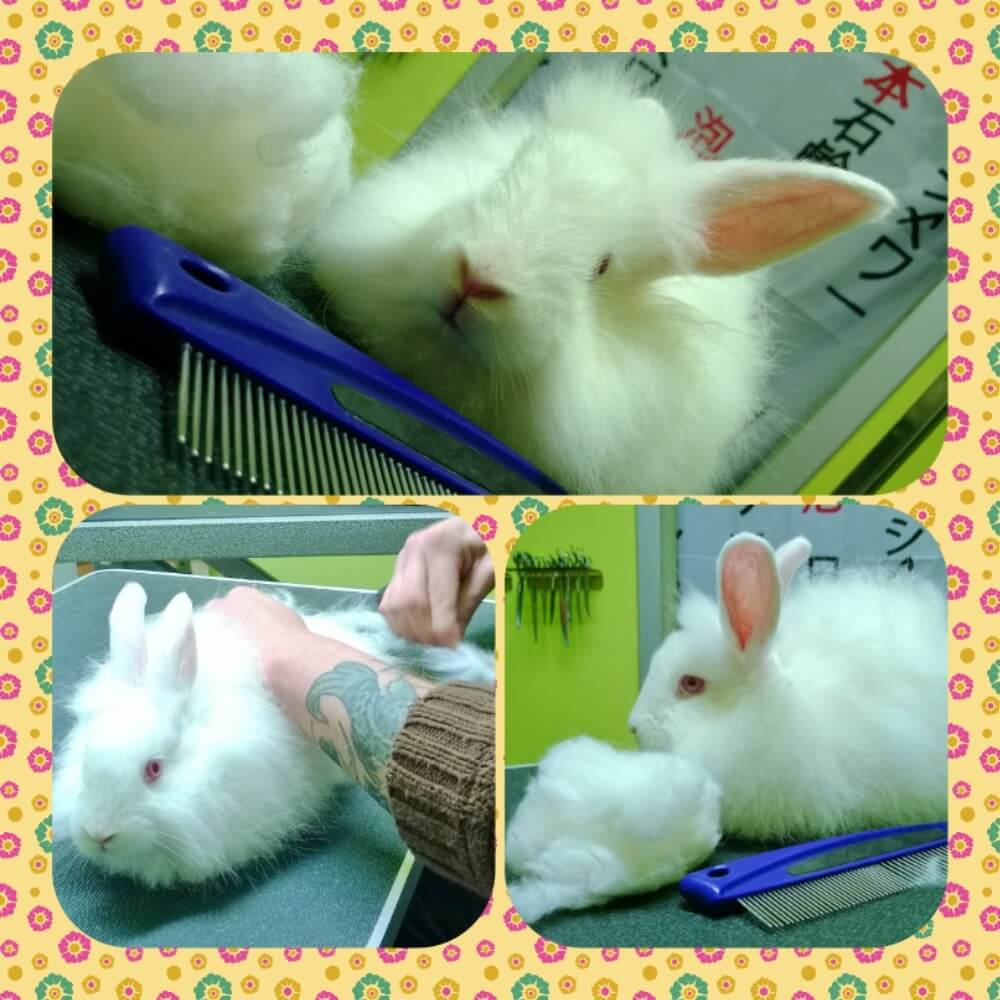 Collage di 3 coniglietti.
