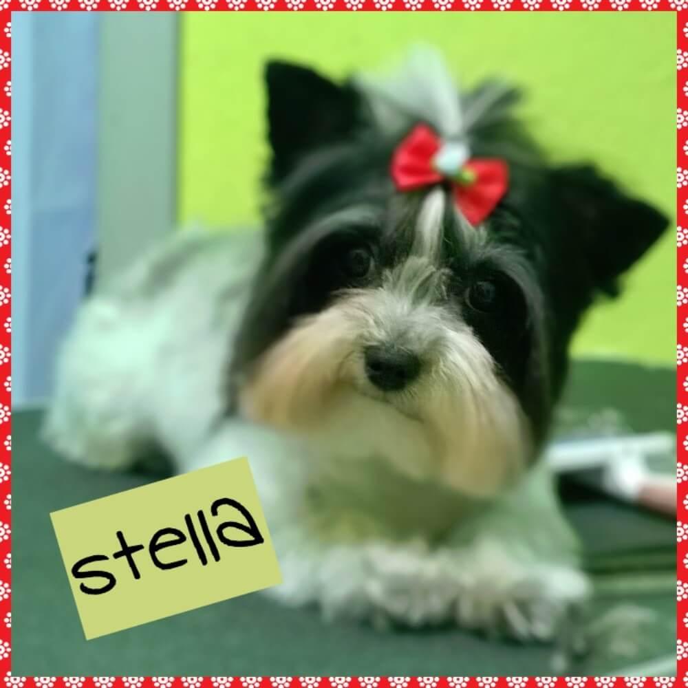 Primo piano cane Stella