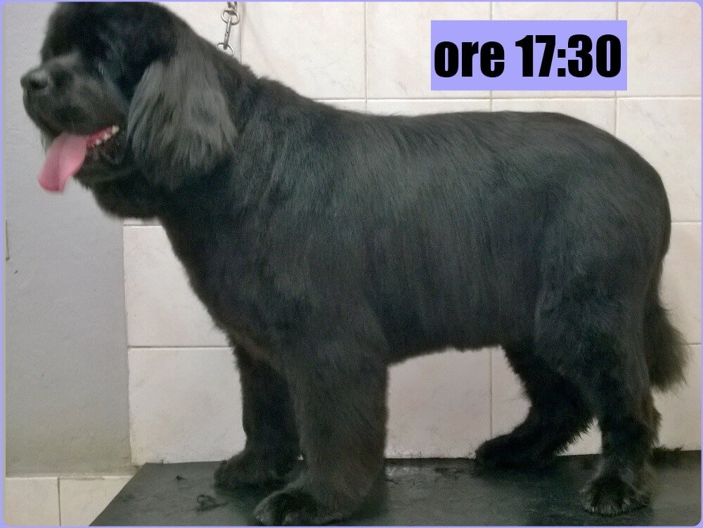 Cane visto di profilo con indicazione orario 17:30