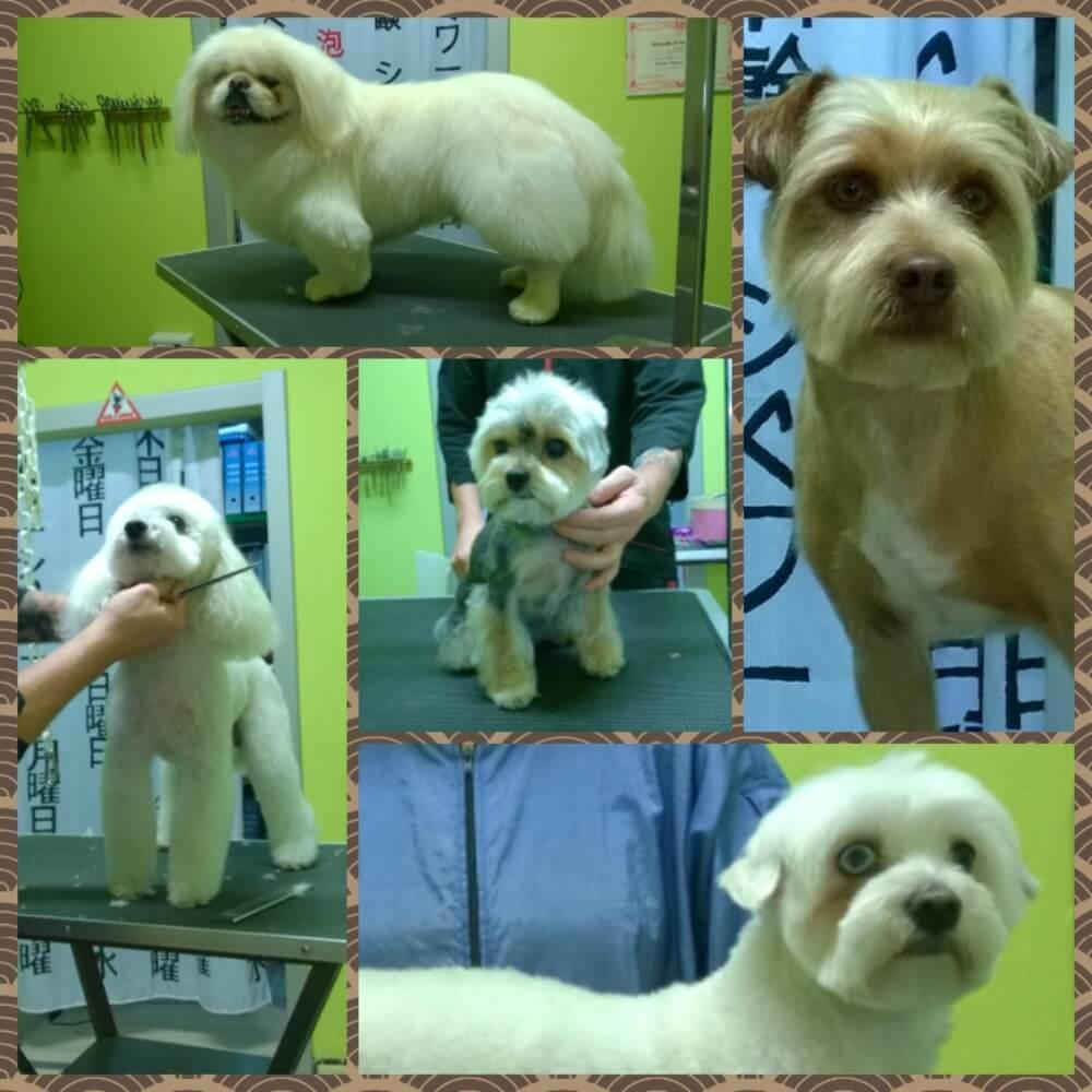 Collage di 5 cani di piccola taglia