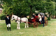 Horse carriages for special events