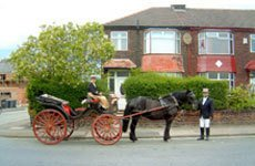 Well-trained horses pulling the carriage