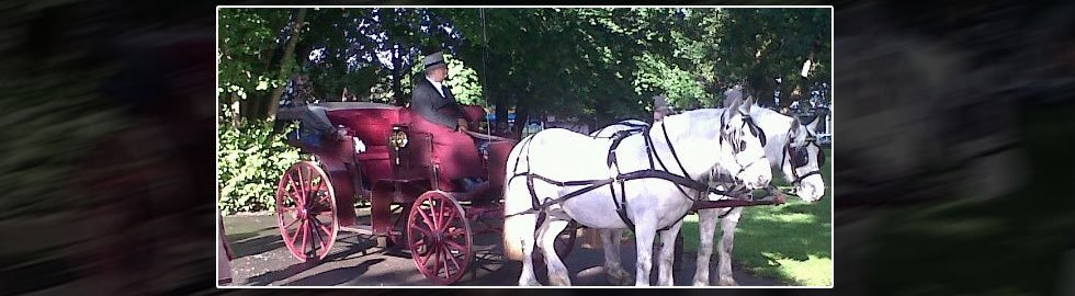 horse drawn carriage contractor