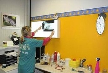 radiografia veterinario