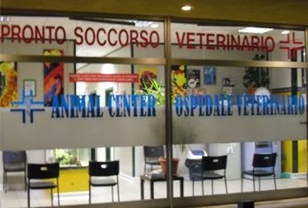 soccorso veterinario