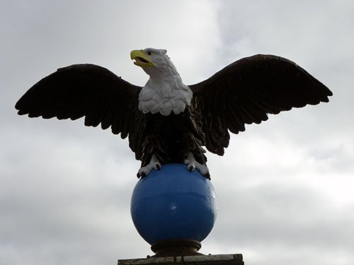 American Bald Eagle - Best History Museums in NJ