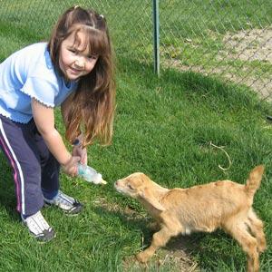 Bottle Feed Nursery Farm Animals