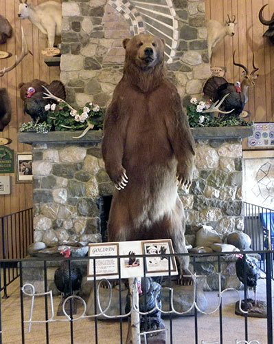 Goliath Bear - Largest bear in the world - Guiness World Record Holder