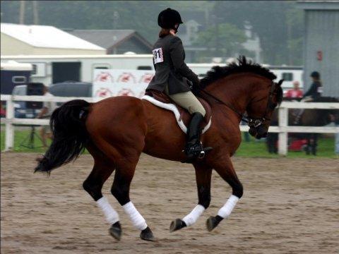 calze per equitazione brescia