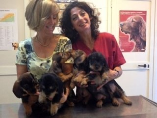 Piccoli pazienti dell'ambulatorio Veterinario