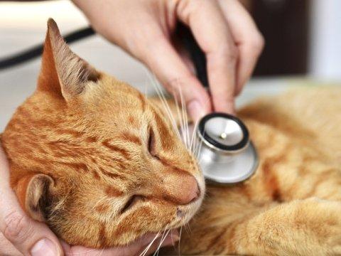 Cura malattie gatti