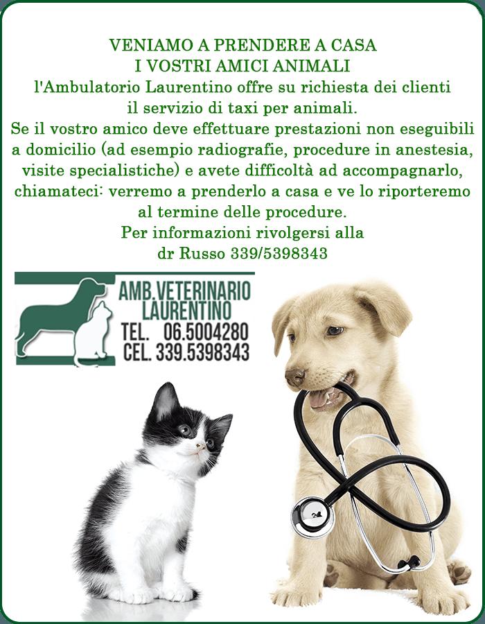 ambulatorio veterinario laurentino