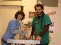 Bravo veterinario