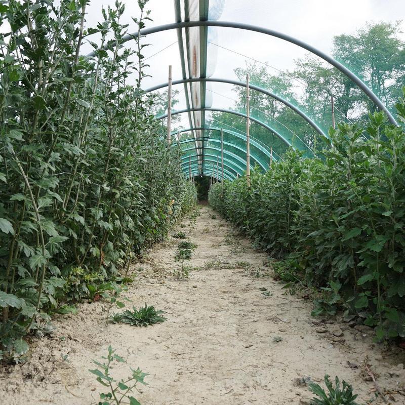 delle piante verdi in una serra
