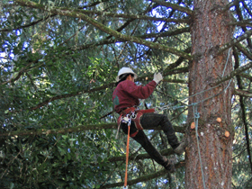 Professional arborist keeping trees and plants healthy in Aurora, OR