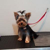 Cane prima del trattamento