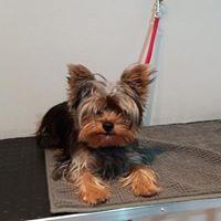 Cane prima del trattamento a Verona