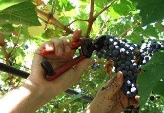 vini Colli di Scandiano e di Canossa