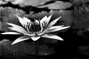 funeral home in vaughan black and white flower
