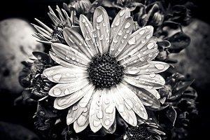 funeral home in woodbridge white flower