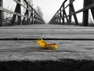 funeral services toronto bridge yellow flower