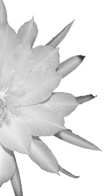 how to plan a memorial service white flower