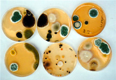 Microbacteria air Melbourne