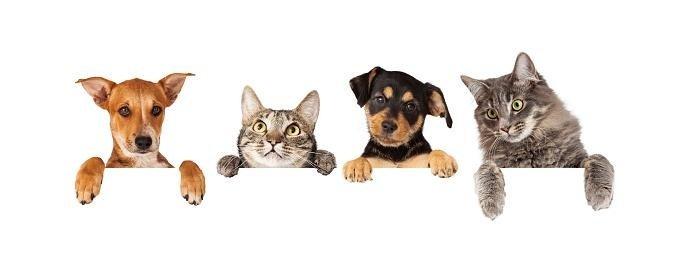 consigli utili per cani e gatti