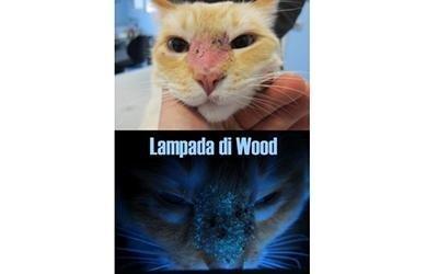 Terapie per gatti torino