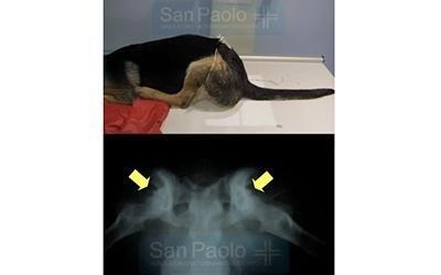 Ortopedia veterinaria torino