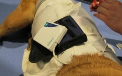 Chirurgia torace animali