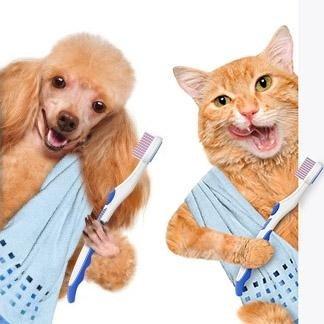 detartrasi cani e gatti