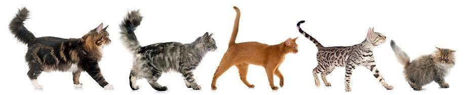 consigli utili per gatti