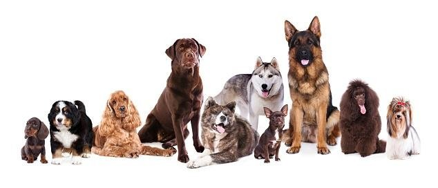 consigli utili per cani