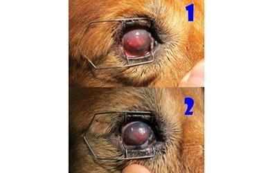 Intervento occhi animali torino