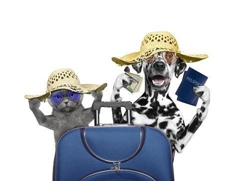 consigli cani e gatti in viaggio