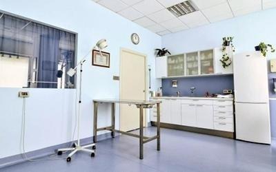 Studio veterinario a torino