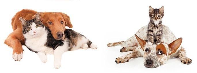 consigli comportamento cani e gatti