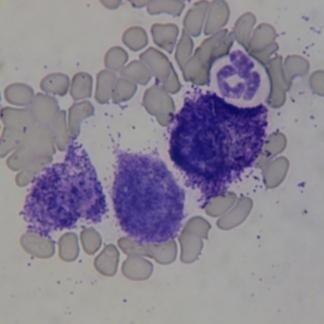 oncologia veterianaria