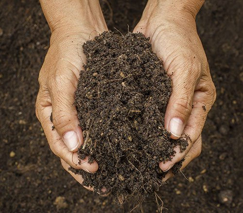 find out if chicken manure is right for your farm - Chicken Manure