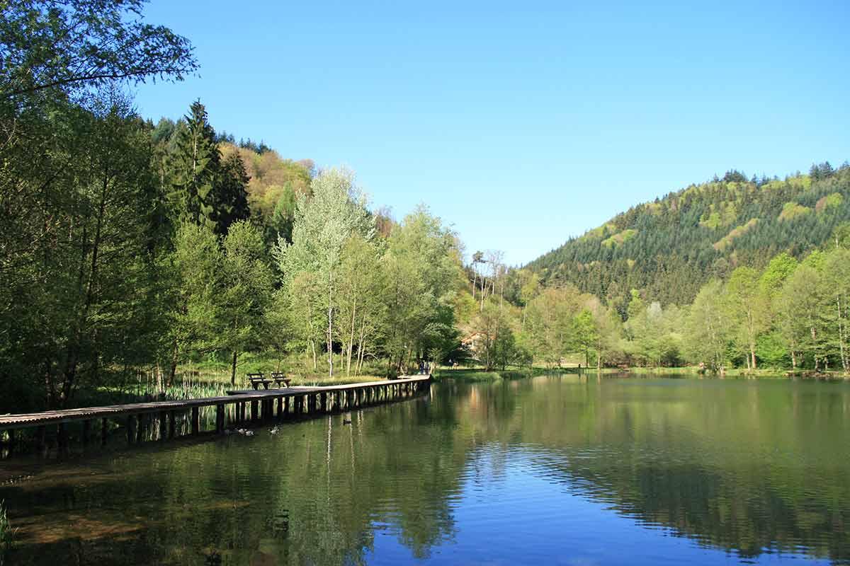 Waldgemarkungen unweit der Gemeinde Elmstein,