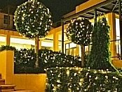 Illuminated fairy lights put on bushes and trees for decoration