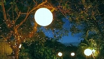 Rice paper lantern hanging from the tree