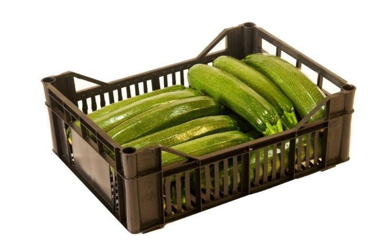 vendita cassetta zucchine Licata